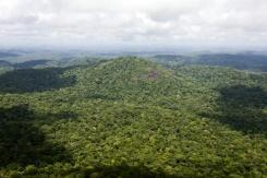Amazon Rainforest: the Guarani-Kaiowá's call for help against deforestation