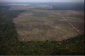 Una ley de la selva para la Amazonia