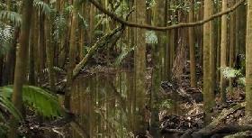 Grupos ecologistas protestan contra proyecto de nueva ley forestal en Brasil