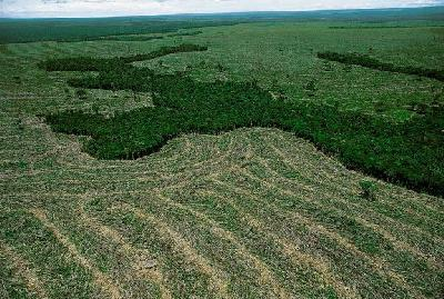 Google Earth Engine: for tracking deforestation in the Amazon - video