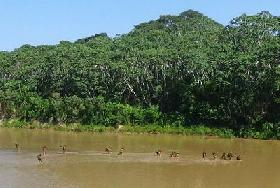 Amazonian tribes endangered by external contact